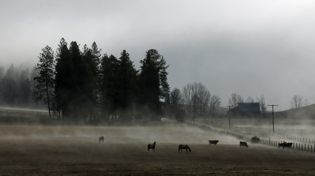 Morning mist rising off the pasture.