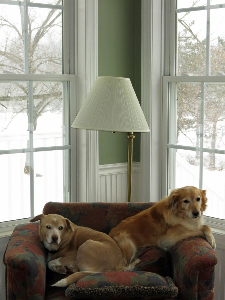 Kristin's parents dogs enjoying the snowy weather from the comforts of their chair.