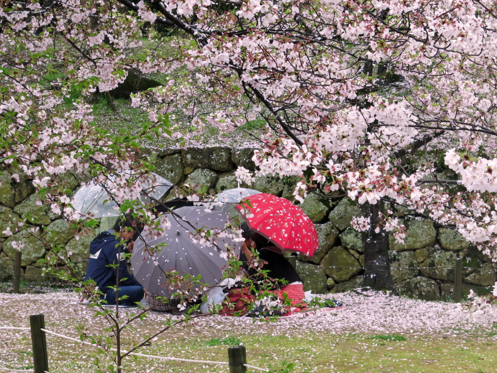 The rain wasn't going to dampen this picnic in Himeji, hanami as we imagined it.