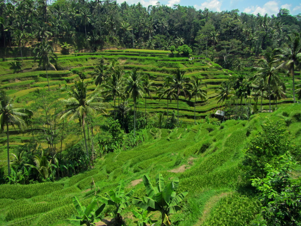 We took the scooter for a day-trip up to the Tegallalang Rice Fields north of Ubud.
